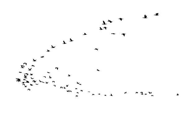Bird cluster